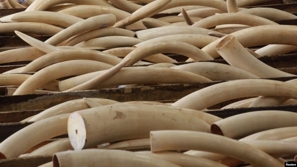 Vai trò của Việt Nam trong buôn bán ngà voi bất hợp pháp toàn cầu đã tăng nhanh trong thập niên qua, theo một báo cáo của Cơ quan Điều Tra Môi trường.