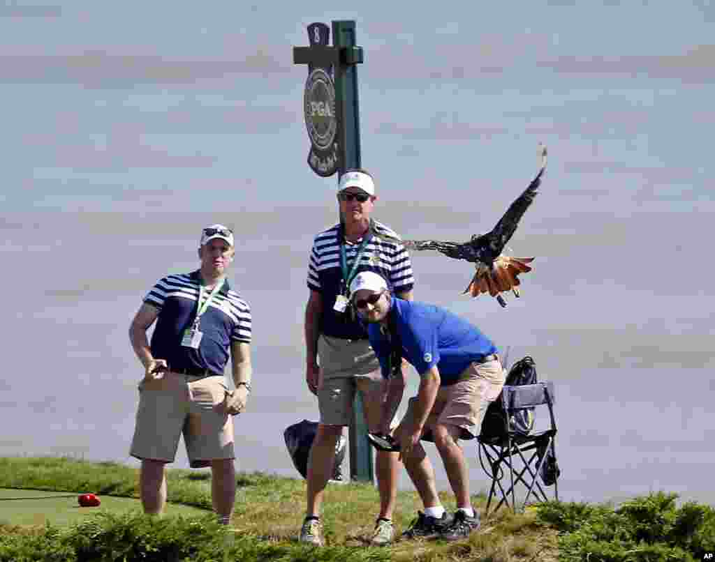 Marshals watch as a bird flies near the 8th tee during a practice round for the PGA Championship golf tournament at Whistling Straits in Haven, Wisconsin, USA.