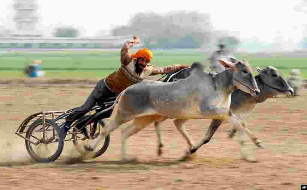 Carrera de carruajes durante los Juegos Olímpicos Rurales de la India en Kila Raipur, norte de Punjab, India.