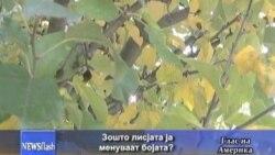 Зошто лисјата ја менуваат бојата