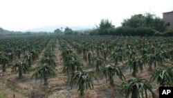 占地6亩的惠州观光果园为工厂客户提供休闲好去处。