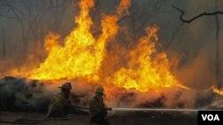 Desde enero se han desatado casi 19.000 incendios forestales en el estado.
