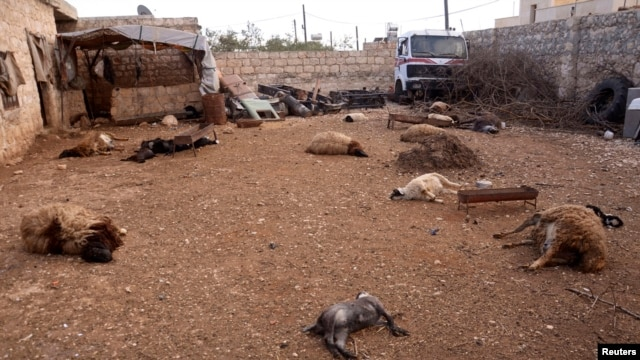 FILE - Animal carcasses lie on the ground, killed by what residents said was a chemical weapon attack on Tuesday, in Khan al-Assal area near the northern city of Aleppo, Mar. 23, 2013.