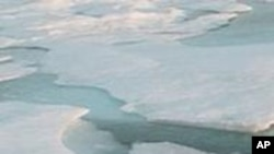 Arctic Sea ice has decreased by fifty percent in 30 years.