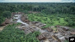 This May 8, 2018 photo released by the Brazilian Environmental and Renewable Natural Resources Institute (Ibama) shows an illegally deforested area on Pirititi indigenous lands as Ibama agents inspect Roraima state in Brazil's Amazon basin. (Felipe Werneck/Ibama via AP)