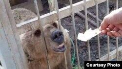 Hewan di Kebun Binatang Taman Murur di Mosul, Irak, yang ditinggalkan pemiliknya. (Foto: Kurdistan Organization of Animal Rights Protection)