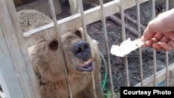 As a U.S.-backed offensive to drive IS from Mosul intensified in recent weeks, the owner of the Murur Park Zoo fled and abandoned the animals, neighbors told VOA. (Credit: Kurdistan Organization of Animal Rights Protection)
