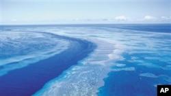 Taman Laut Great Barrier Reef di Australia. (Foto: Dok)