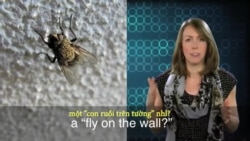 Thành ngữ tiếng Anh thông dụng: Fly on the wall (VOA)