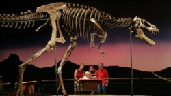 Quiz - Study Provides New Details about Teenage T. Rex