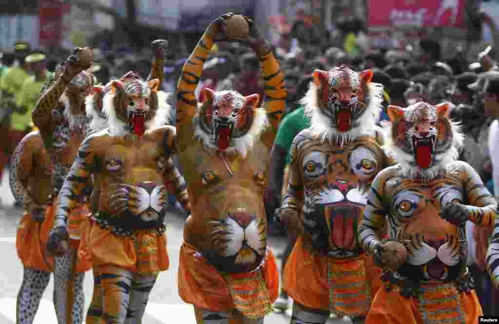 인도 남부 트리추 시에서 열린 추수 감사 축제에서 호랑이 분장을 한 남성들이 춤을 추고 있다.