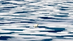 FILE - A polar bear stands on the ice in the Franklin Strait in the Canadian Arctic Archipelago, July 22, 2017.