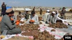 افغان سوداګر وايي تېرکال۵۱ کيلو ګرامه جلغوزي د ۳۰ او ۴۰ زرو کلدارو ترمنځ خرڅول کېدل، خو سږکال په شاوخوا ۷۰زره کلدارو خرڅیږي.
