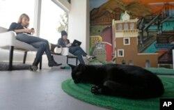 Một chú mèo ngủ trên thảm trong khi cô Donna Garrett (trái) và anh Adam Myatt (phải) kiểm tra email bên trong quán cà phê Cat Town Cafe ở Oakland.