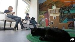 Kedai kopi dengan kucing di Cat Town Cafe in Oakland, California.