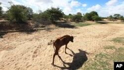 Sušna područja u Sudanu (arhivski snimak)