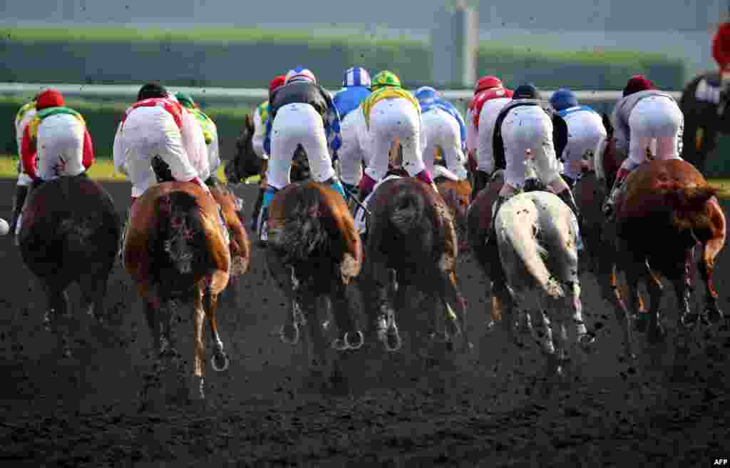 Jockeys compete in the Dubai Kahayla Classic race held on Dubai World Cup Day at Meydan racecourse in Dubai, UAE. A cosmopolitan gathering of horses from seven different countries contest the U.S. $10 million Emirates Dubai World Cup.