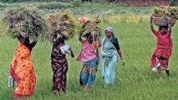 Women at work in the fields in Sarai Nayat, India