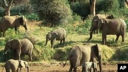 Des éléphants en Angola