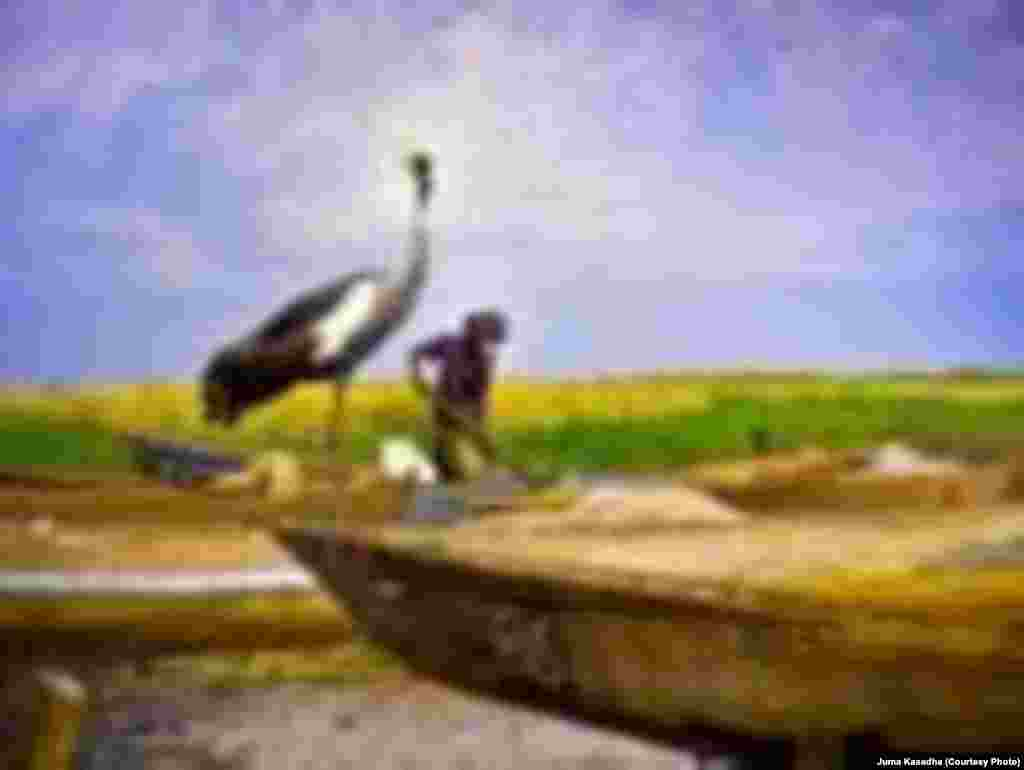 Crane Standing in a Boat - Contest Entry
