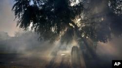 Un caballo pasta en medio del vapor de fumigaciones en la provincia de Pinar del Río en Cuba. La isla ha militarizado la lucha contra el Zika, asignando 9.000 soldados a los esfuerzos de fumigación.