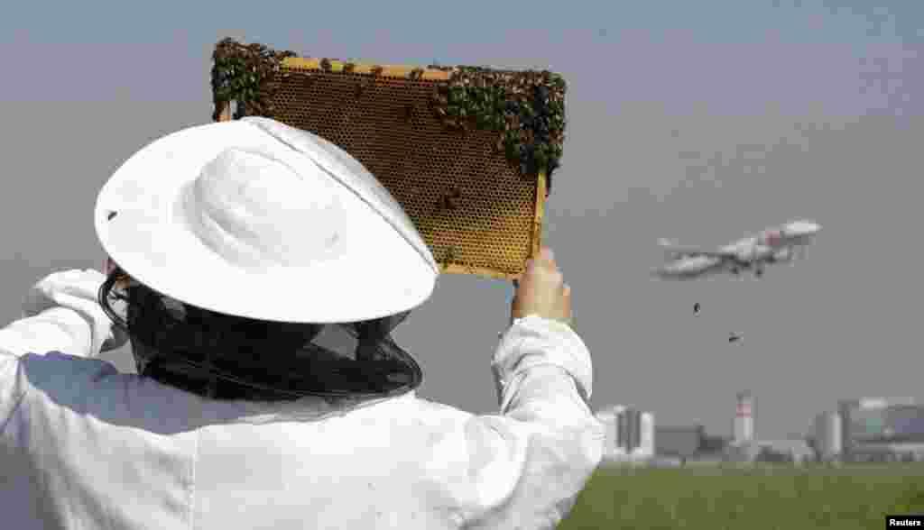 جمہوریہ چیک کے دارالحکومت پراگ کے ویکلاو ہیول ہوائی اڈے پر تکنیکی شعبے سے منسلک رومن کٹیل واسچر نے شہد کی مکھیاں بھی پال رکھی ہیں۔