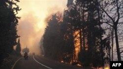 Cháy rừng ở Israel