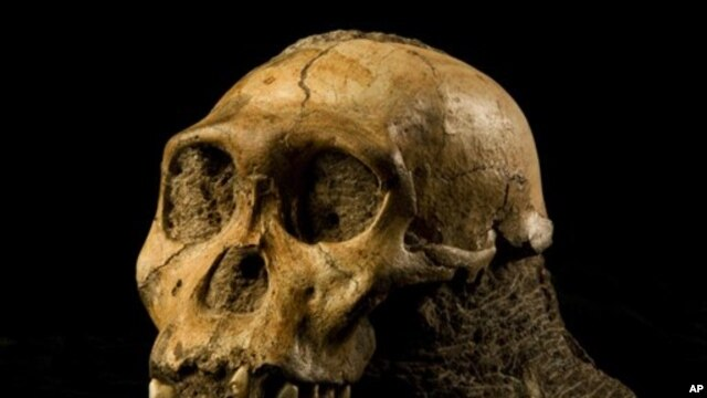 Skull of Australopith discovered in South Africa