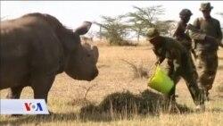 SAD: Umjetnom oplodnjom do zaštite ugroženih vrsta
