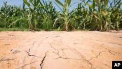 The ground is cracked at the edge of a corn field near England, Arkansas, where oppressive heat is affecting the crop.