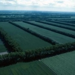 Windbreaks in North Dakota