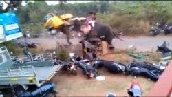 Furioso elefante destroza 27 vehículos en la India