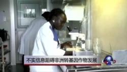 不实信息阻碍非洲转基因作物发展