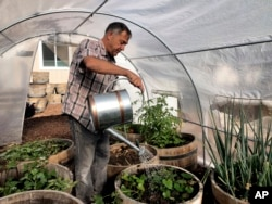 Don Johnson waters plants in his greenhouse using water from his air-to-water system installed by Ted Bowman, a design engineer with Tsunami Products, in his backyard in Benicia, Calif., on Sept. 28, 2021. (AP Photo/Haven Daily)