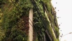 看天下: 抗击地球变暖 印尼城市花园立体化