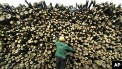Nhân viên kiểm tra chất lượng gỗ tại tỉnh Hồ Nam ở Trung Quốc.