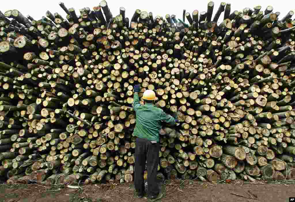A worker inspects timber quality in a wood yard in Yuanjiang, in China's central Hunan Province. China has become the world's leading importer of wood from developing countries such as Indonesia and Papua New Guinea where illegal logging is common. Activi