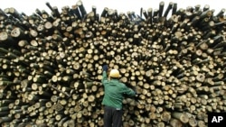 FILE - A worker inspects timber quality in a wood yard in Yuanjiang, in China's central Hunan Province. China has become the world's leading importer of wood from developing countries such as Indonesia and Papua New Guinea, where illegal logging is common.