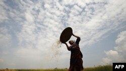 Nông gia trên thế giới sẽ phải tăng gấp đôi sản lượng lương thực để thỏa mãn nhu cầu của dân số đang gia tăng nhanh chóng