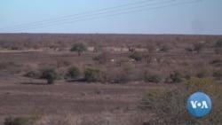Botswana's Drought Makes Wasteland of Harvests, Livestock