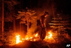A firefighter uses a drip torch to ignite vegetation while trying to stop the Dixie Fire from spreading in Lassen National Forest, Calif., July 26, 2021.