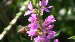 Pčelari amateri pozivaju na širenje pčelinjaka