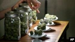 یک مرکز فروش ماریجوانا برای مصارف پزشکی