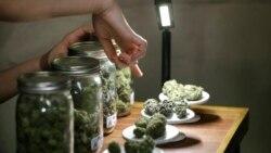 Medical Marijuana Legal in Nation's Capital