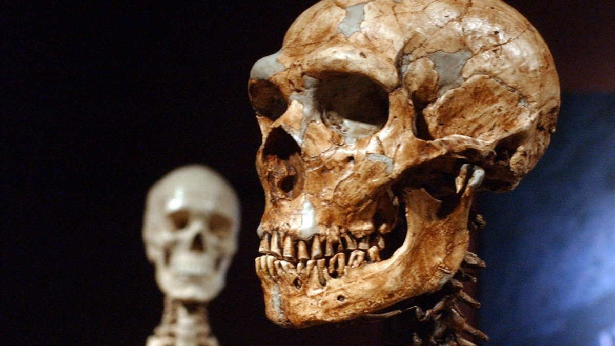 Study: Just 7 Percent of Our DNA Is Special to Modern Humans