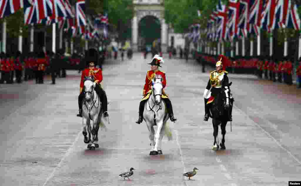 Two ducks cross the Mall in front of members of the guards and household cavalry during pageantry for the State Opening of Parliament in London.
