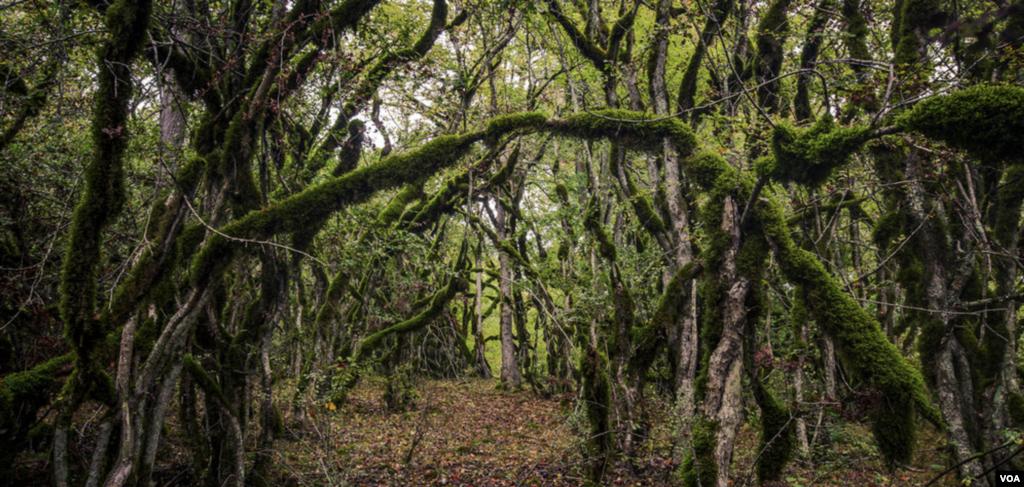جنگل «الیمستان»، محل رویش گیاه «الیما» است. الیمستان، روستایی توریستی در شهرستان آمل است. عکس: سیدوحید حسینی