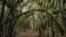 <div>جنگل «الیمستان»، محل رویش گیاه «الیما» است. الیمستان، روستایی توریستی در شهرستان آمل است.<br /> عکس: سیدوحید حسینی</div>