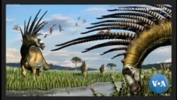 A Spiny Necked Dinosaur Wows in Argentina