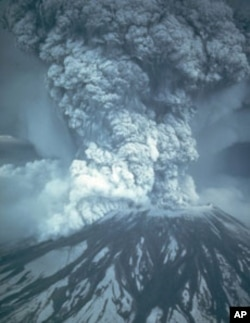 Scientists are amazed that the once-charred area around Mount St. Helens is new teeming with life.